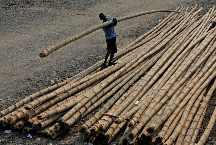 Las propiedades del bambú cambian tras su recolección