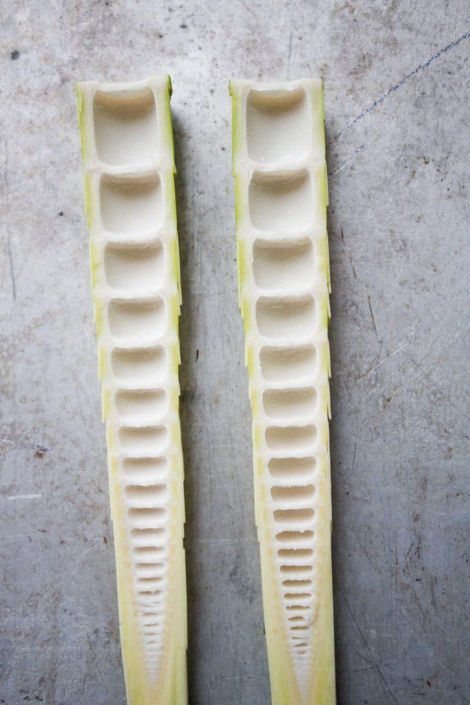 La estructura interna es clave para entender las propiedades del bambú