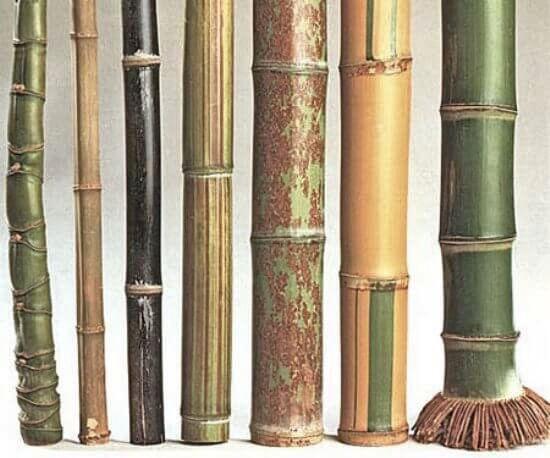 Las propiedades del bambú son comunes en los diferentes tipos de plantas de bambú