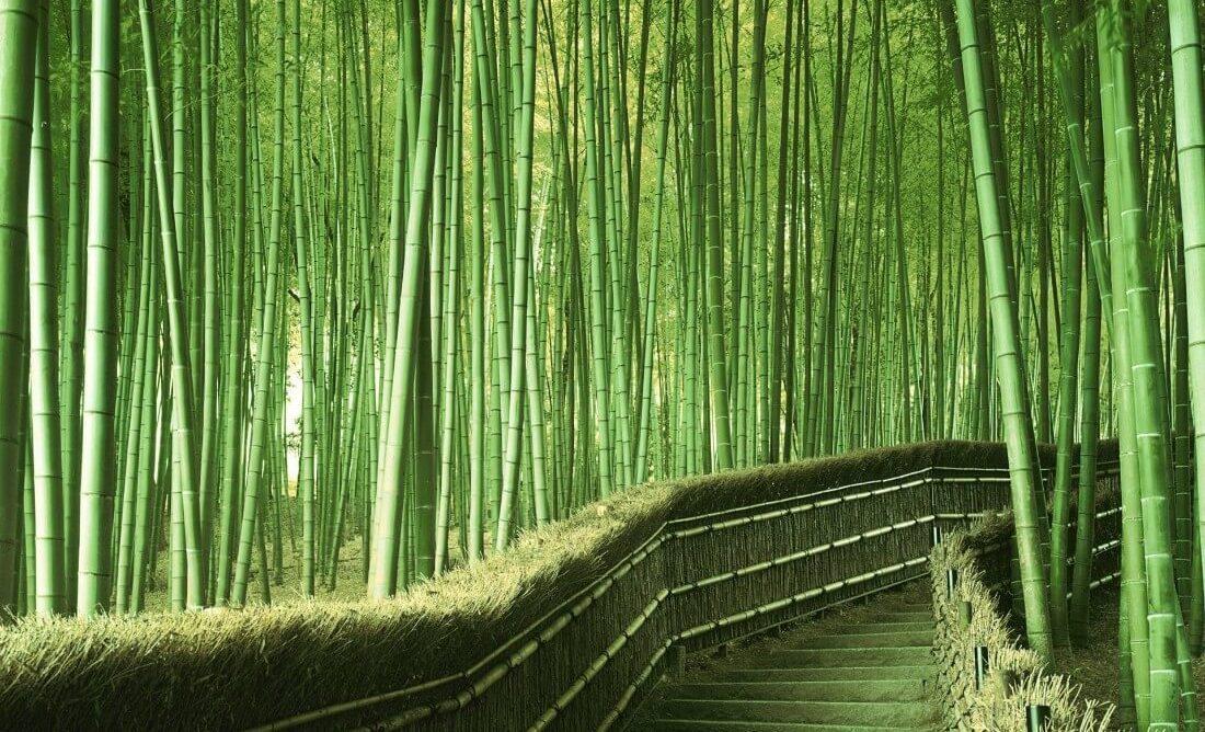 Bosque de bambú en el bosque de Arashiyama, Japón